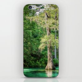 Florida Cypress Tree and Spring iPhone Skin