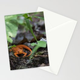 Bright Newt Stationery Cards