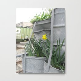 A spark of color Metal Print