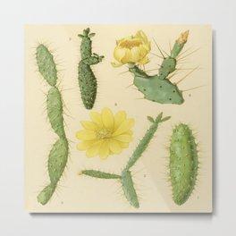 Vintage Botanical Cacti Metal Print