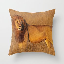 Lion in the morning light - Africa wildlife Throw Pillow