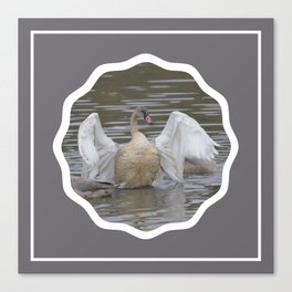 Swan Dance in Grey Canvas Print