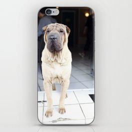 French Cafe Pooch iPhone Skin