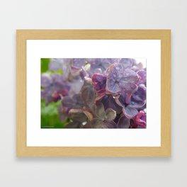 Lilacs in the Rain Framed Art Print
