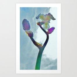 Iris410 Art Print