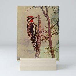 Vintage Print - Birds and Nature (1905) - Yellow-Billed Sapsucker Mini Art Print
