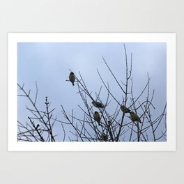 Winter Birds on Bare Branches Art Print