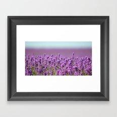 Snowshill Lavender Framed Art Print