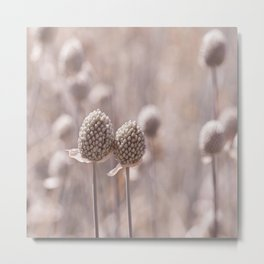 Allium 0161 Metal Print