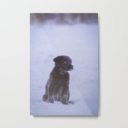 Remy in Snow Metal Print