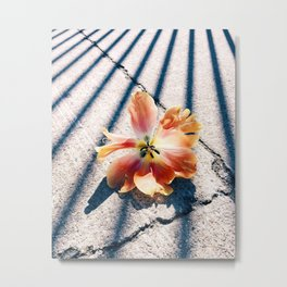 Tulip Stripes Metal Print