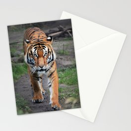 The Bengal Tiger Stationery Cards