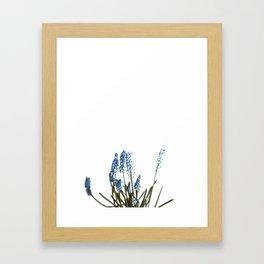 Blue Blossom (Color) Framed Art Print