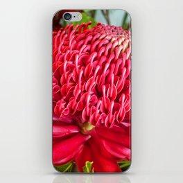 Red Waratah Flower iPhone Skin
