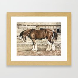 Draught Horse Framed Art Print