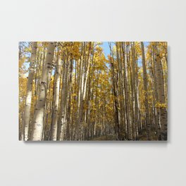 CO Aspens Metal Print