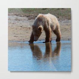 Grizzly Cub Drinking from Stream  Alaska Katmai National Park #Socety6 Metal Print