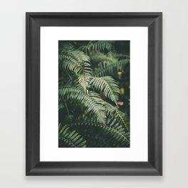 Ferns V Framed Art Print