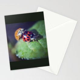 Lady Bug Love Stationery Cards