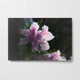 Azalea Bloom in the Sunshine Metal Print