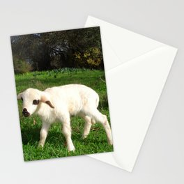 A Newborn Lamb Finding Its Feet Stationery Cards