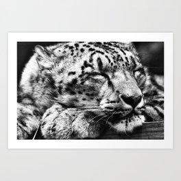 Snow Leopard Slumber Art Print