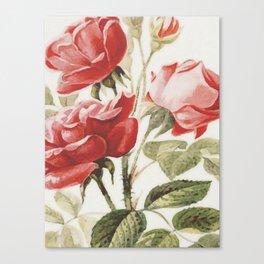 Vintage Botanical No. 4 Canvas Print