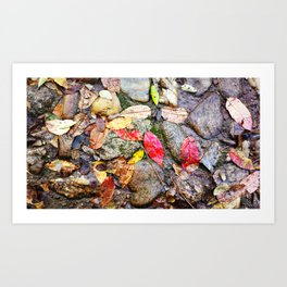 A Cobble Stone Autumn Art Print