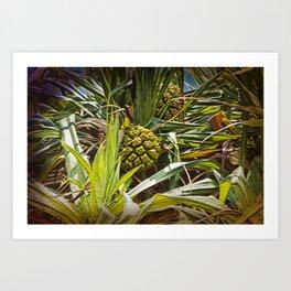 Pandanus Palm Fruit Art Print