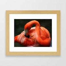 Flamingo # 2 Framed Art Print
