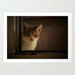 Gast on the window Art Print