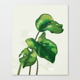 Big leaves and Ladybird Canvas Print