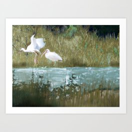 Marsh Birds Art Print