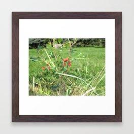 Holly Plant Framed Art Print