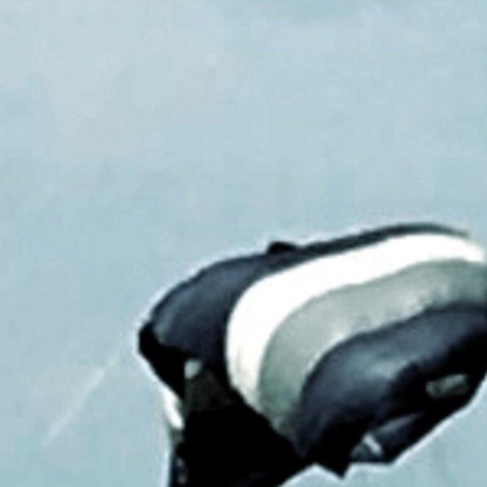Landing Leggings