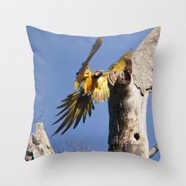 Birds from Pantanal Arara Canindé Throw Pillow