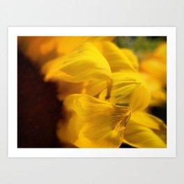 Sunflower Macro 2 Art Print