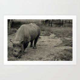 Black Rhino (B&W) Art Print