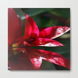 Red Bromelia Metal Print