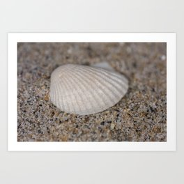 Sea shell on the beach Art Print