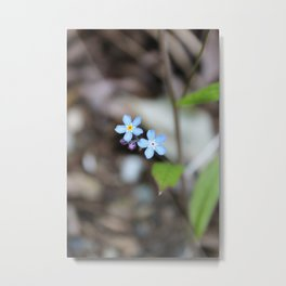 Two Forget-Me-Nots Metal Print