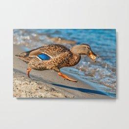 The Getaway Duck Photograph Metal Print