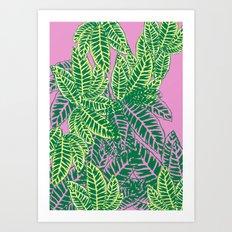 Zebra Plant  Art Print