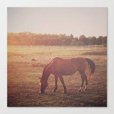 Horse (#7) Canvas Print