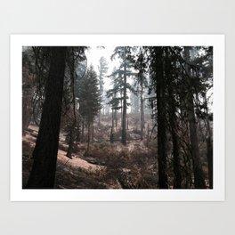 Charred Forest Art Print