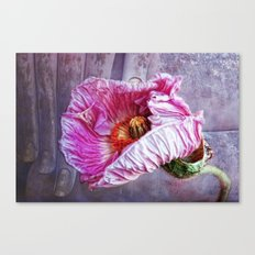 wisdom and beauty Canvas Print