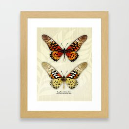 Butterfly14_Papilio Antimachus • male pair Framed Art Print