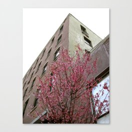 A Tree Grows In Brooklyn Canvas Print
