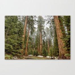 Sequoias in the Fog Canvas Print