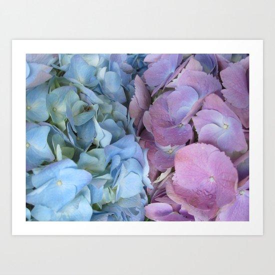b&p flowers  Art Print